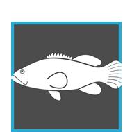 Granjas de peces
